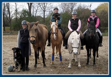 Franklands Farm Top Dressage Horses And Training